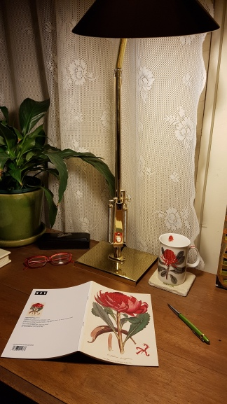 waratah cup + notebook 20181016_002636